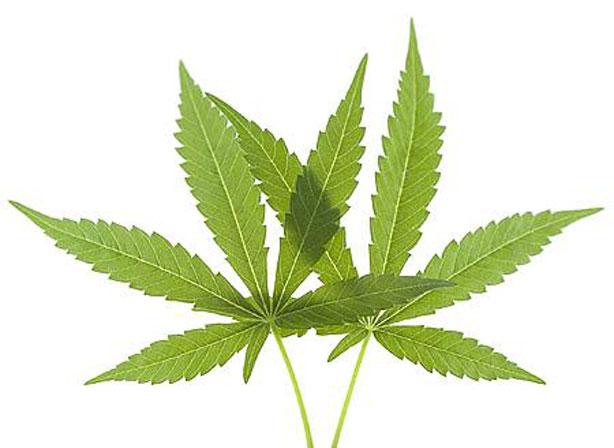 Recogida de Datos: DataPanel express legalización del cannabis.