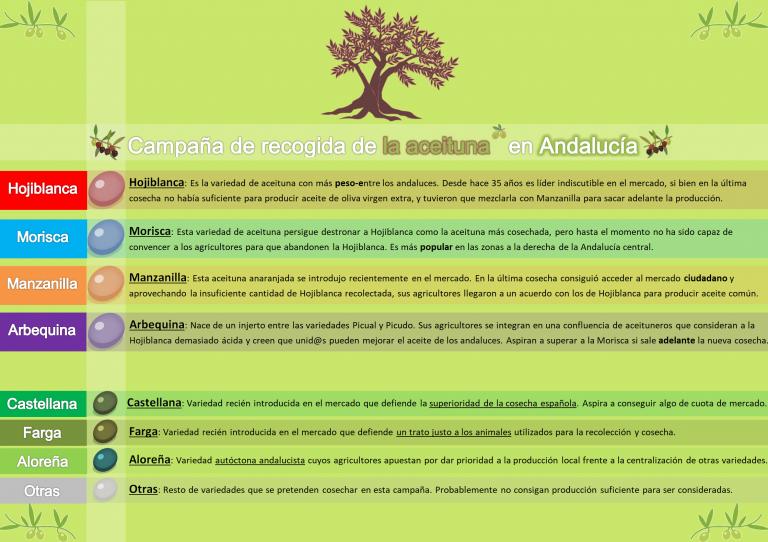 Electomanía publicará una estimación diaria de la cosecha de la aceituna en Andalucía.