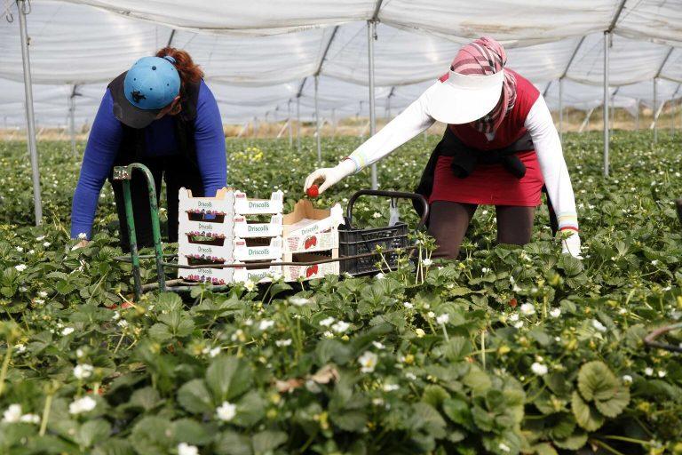 El CMin aprueba la flexibilización de los contratos agrarios