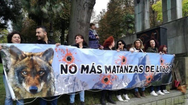 Ribera y Planas comparecen hoy en el Senado para informar sobre la prohibición de cazar lobos en toda España