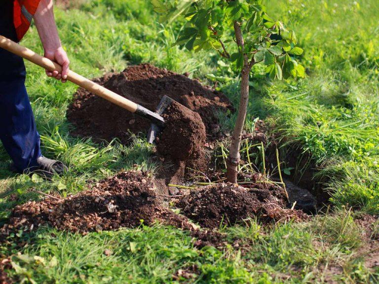La Princesa Leonor y la Infanta Sofía participarán en la plantación de seis árboles por el Día del Medio Ambiente
