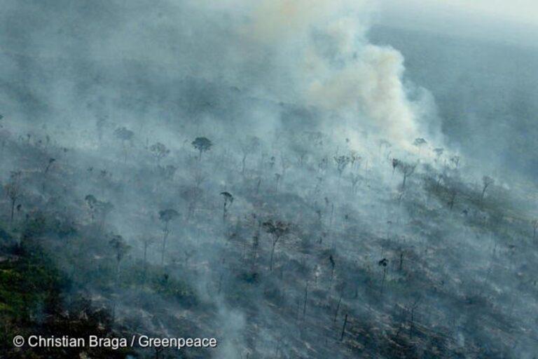 La deforestación en la Amazonia sigue fuera de control, según Greenpeace