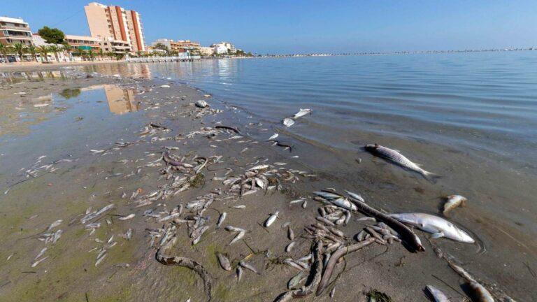 La cifra de la vergüenza: 15 toneladas de peces y algas retiradas en el Mar Menor