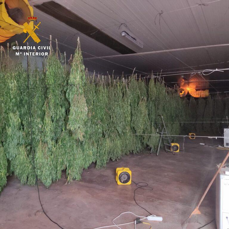 Desarticulada una trama de cultivo de cannabis en Huelva